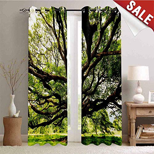 Hengshu Nature Room Darkening Wide Curtains The Largest Monkey Pod Tree in Thailand Eastern Green Big Branches Growth Eco Photo Decor Curtains by W84 x L84 Inch Green Brown