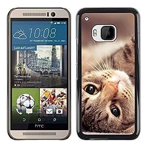 PC/Aluminum Funda Carcasa protectora para HTC One M9 Maine Coon Cat American Shorthair / JUSTGO PHONE PROTECTOR