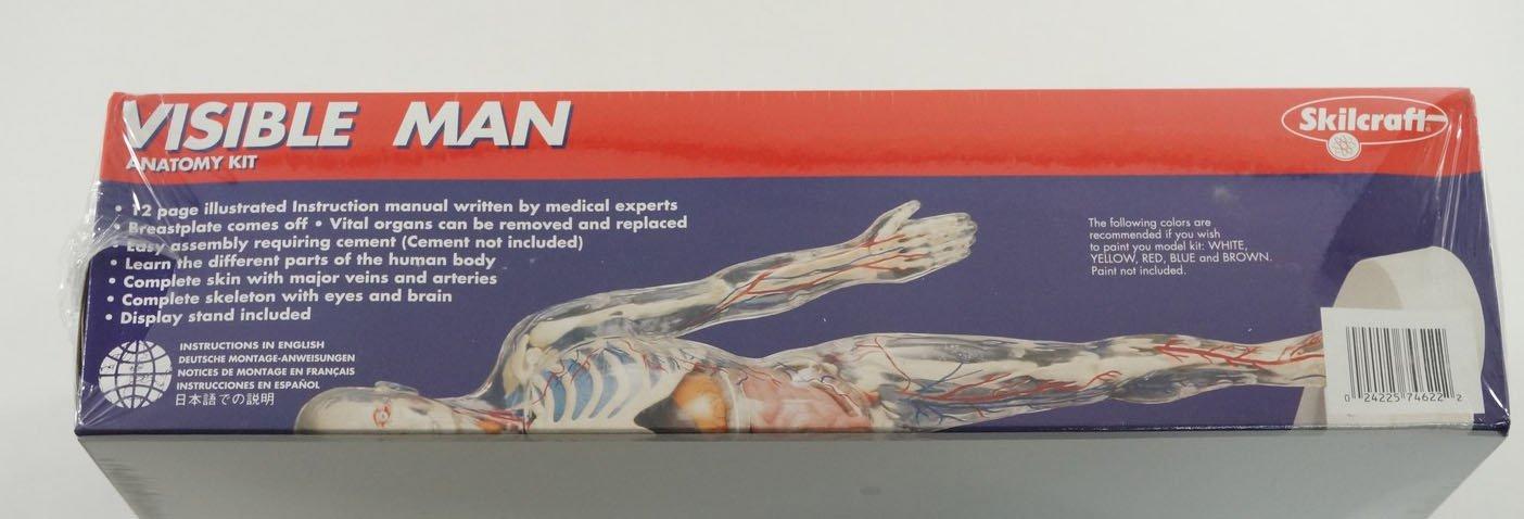 Visible Man Skeleton Body Organs Medical Anatomy Model Kit New
