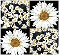 1200 x Shasta Daisy Seed - Chrysanthemum maximum - Shasta Daisy Flower Seeds ~ Perennial BIG WHITE BLOOMS - NATIVE TO WESTERN EUROPE - Hardy Zones 3-9 - By MySeeds.Co