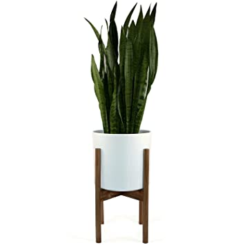 Fox Fern Mid Century Modern Plant Stand Acacia Wood Excluding