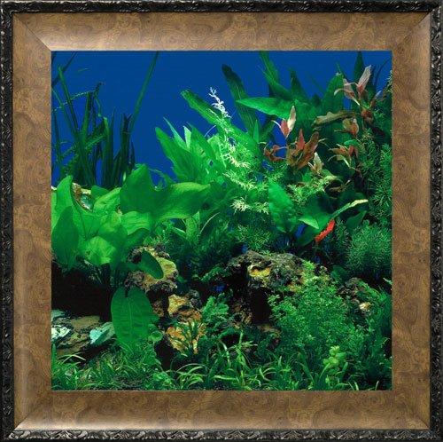aquavista-av500sbale-wall-mounted-aquarium-av-500-seaweed-background-with-leo-frame