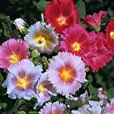 Outsidepride Carnival Hollyhock Flower Seed Plant Mix - 1000 Seeds