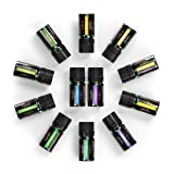 Anjou Essential Oils Set (12 x 5 mL Oils; Includes 100 Percent Pure Lavender, Sweet Orange, Tea Tree, Eucalyptus, Lemongrass, Peppermint, Bergamot, Frankincense, Lemon, Rosemary, Cinnamon, and Ylang-Y