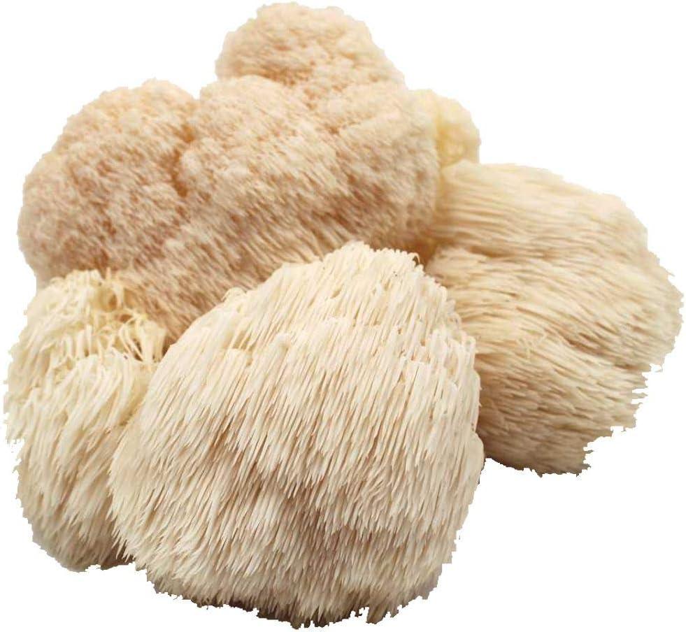 Austernpilz fertige Zuchtkultur Pilze selber züchten, einfache Pilzzucht