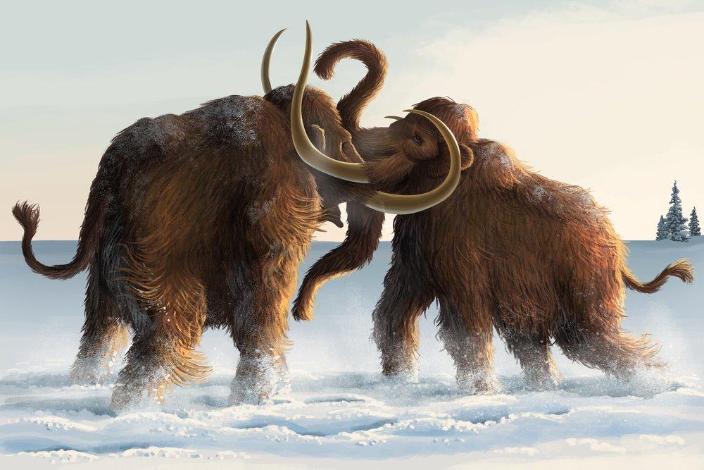 Wooly Mammoths 36 x 54 Giclee Print LANT-50045-36x54 36 x 54 Giclee Print  B017EA0CME