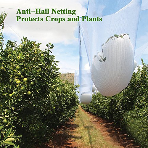 Reinforced Diamond Protector - Agfabric Anti Hail Netting - Bird Netting Alternative - Protect Fruits and Plants from Hail Damage, Diamond-Shaped, 10x50ft, White