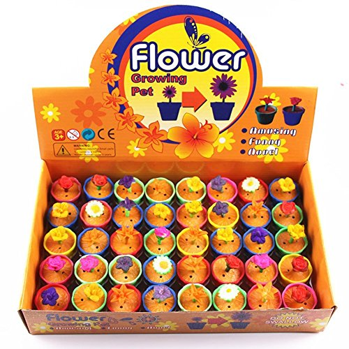UTOPP 40 pcs Growing Flowers Water Swell Up Colorful Flower Plants Children Kids Magic Expansion - Magic Swell