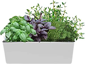"UKAN Self Watering Planter, Window Gardening Box, Plastic Flower Pots with Automatic Irrigation System Modern Decorative Gardening Pots for Indoor Plants, Herbs, Flowers, Rectangle, 16""X5.5"", White"