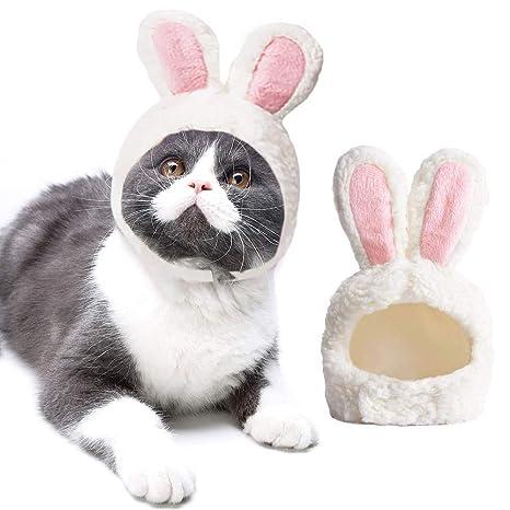 Gato Lindo Sombrero Cabeza De Conejito Conjunto Mascota ...
