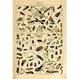 Vintage Poster Print Art Insects Identification Reference Collection Entomology Diagram Chart Decor20.87'' x 31.50''