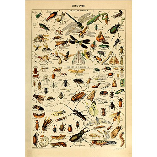 Insect Wall - 5