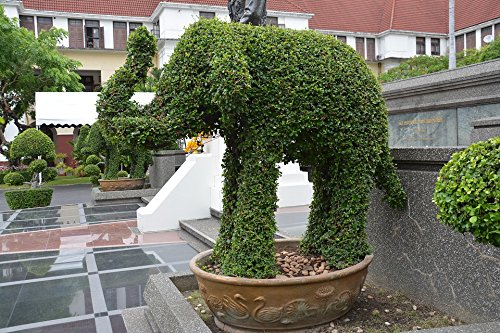 - Home Comforts Canvas Print Design Leaf Topiary Park Animal Elephant Hedge Stretched Canvas 10 x 14