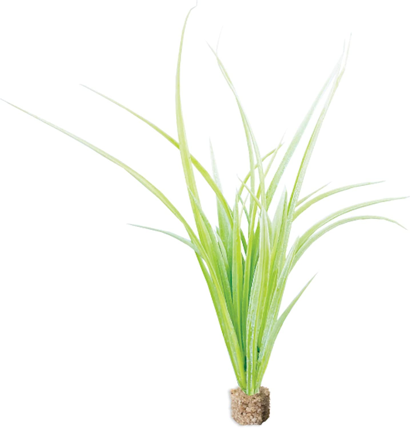 Current USA 12'' Tall Fountain Grass Artificial Aquarium Plant Decor with Weighted Stone Base| Natural, Lifelike Freshwater Fish Tank Decoration | Non-Toxic Plastic | Light Green