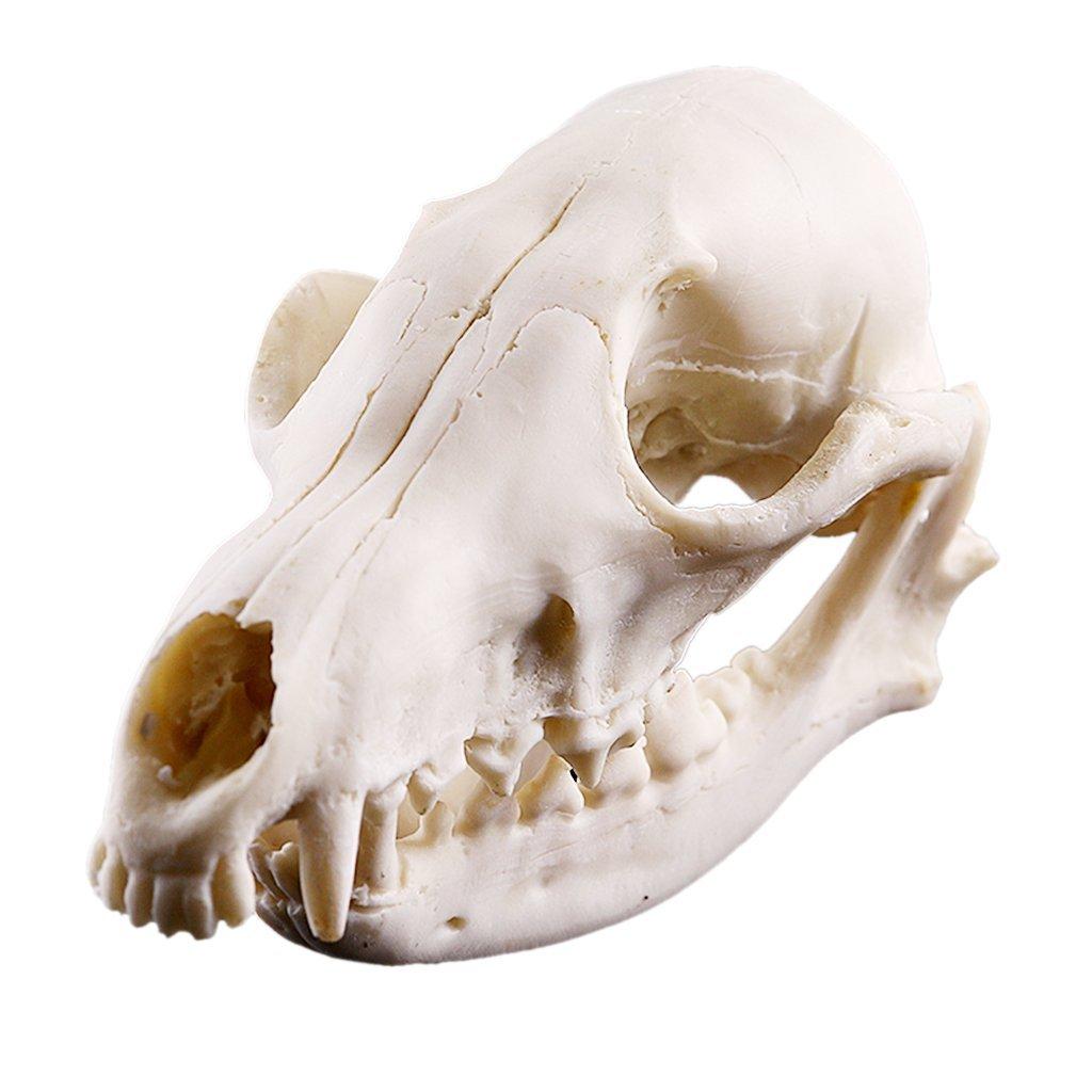 Amazon.de: Realistisch Fuchs Schädel Figur Harz Skelett Modell für ...