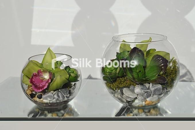 Impresionante y moderna Juego de 3 pecera verde arreglos florales con orquídeas y suculentas: Amazon.es: Hogar