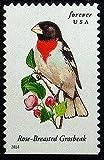 Rose-Breasted Grosbeak Bird USA -Framed Postage Stamp Art 12801