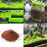 Aolvo Aquarium Plants Seeds Aquatic Double Leaf Carpet Water Grass for Home Fish Tank Rock Lawn Garden Decoration,Easy Care, Hardy and Long Lasting Plant