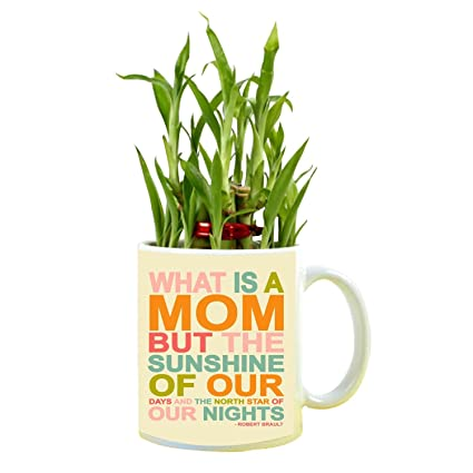 YaYa Cafe Birthday Gifts For Mom Sunshine Feng Shui Lucky Bamboo Indoor Mug Planter With 1 Tier Amazonin Garden Outdoors