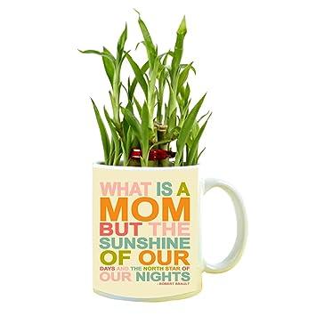 YaYa Cafe Birthday Gifts For Mom Sunshine Feng Shui Lucky Bamboo Indoor Mug Planter