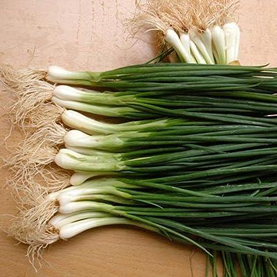 30pcs Shallot Seeds Organic Vegetable Seeds Onion Seeds Non-GMO Easy to Grow for Home Garden Outdoor Yard Farm Planting : Garden & Outdoor