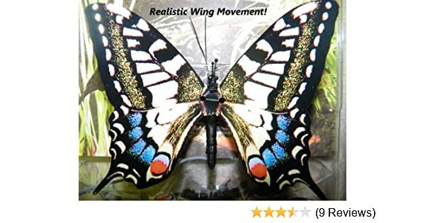 6436ee15f72e5 Amazon.com: Active Aliforms Moving Butterfly - Swallowtail: Toys & Games