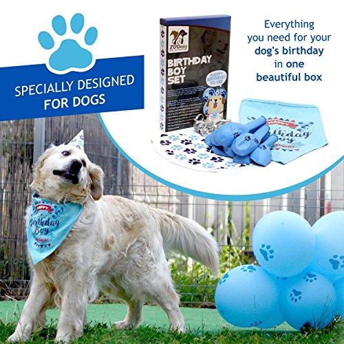 Buy dog birthday gifts