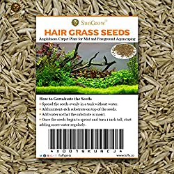 Luffy Hair Grass Seeds, Mid or Foreground Tank Decor, Amphibious Carpet Aquarium Plant, Can Grow Fast Up to 4 Inches, Creeper Plant Covers Tank Surface Quickly, 0.35 Ounce Pack