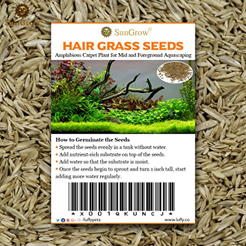 "Luffy 0.35 oz. Hair Grass Seeds - Mid or Foreground Tank Decor - Amphibious Carpet Aquarium Plant - Can Grow Fast Up to 4"" - Short Germination Time - Creeper Plant Covers Tank Surface Quickly"