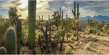 GoEoo Dusk Desert Cactuses Plants Scenic 20x10ft Vinyl Photography Background Sunset Desolate Place Scenery Backdrop Wedding Shoot Indoor Decors Landscape Wallpaper Studio