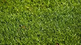 Nature's Seed TURF-LOPE-5000-F Perennial Ryegrass Seed Blend, 5000 sq. ft.