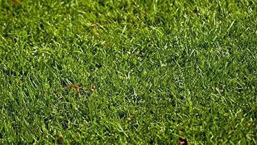 (Nature's Seed TURF-LOPE-5000-F Perennial Ryegrass Seed Blend, 5000 sq. ft.)