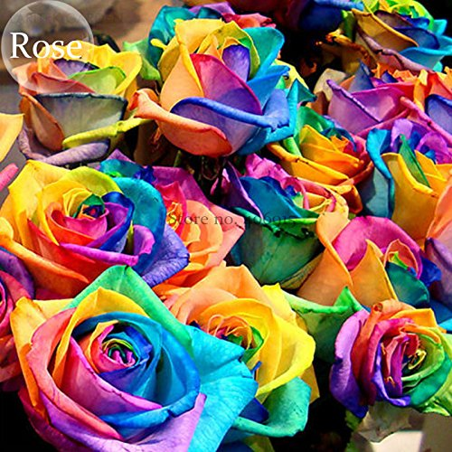 Solution Gardens & Gifts Colorful Rainbow Rare Rose Valentine Lover Flower, 50 Seeds, light fragrant perennial flowers