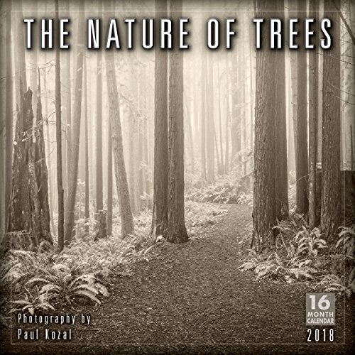 The Nature Of Trees - Photography By Paul Kozal 2018 Wall Calendar (CA0148)