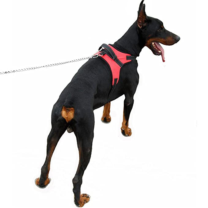 Pet Home Arnés para perro, sin tirones, arnés para chaleco de ...