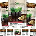 ASIAN Collection Herb Seeds Variety Packets by HOME CHEF HERBS. Non GMO Asian Seeds: Thai Basil, Garlic Chives, Scallion Seeds (Heshiko), Lemon Basil Plant, Cilantro Seeds