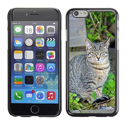 """Just Phone Cases Hard plastica indietro Case Custodie Cover pelle protettiva Per // M00127734 Yeux Animaux Green Grass de Cat Cat // Apple iPhone 6 PLUS 5.5"""""""