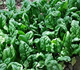 Search : 200+ Spinach Seeds- Organic- Giant Noble- Heirloom Variety by Ohio Heirloom Seeds