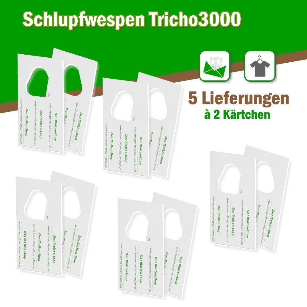 Der Motten-Shop contra polillas polillas 6000 Unidades x 5 Suministros a 2 Tarjetas: Amazon.es: Jardín