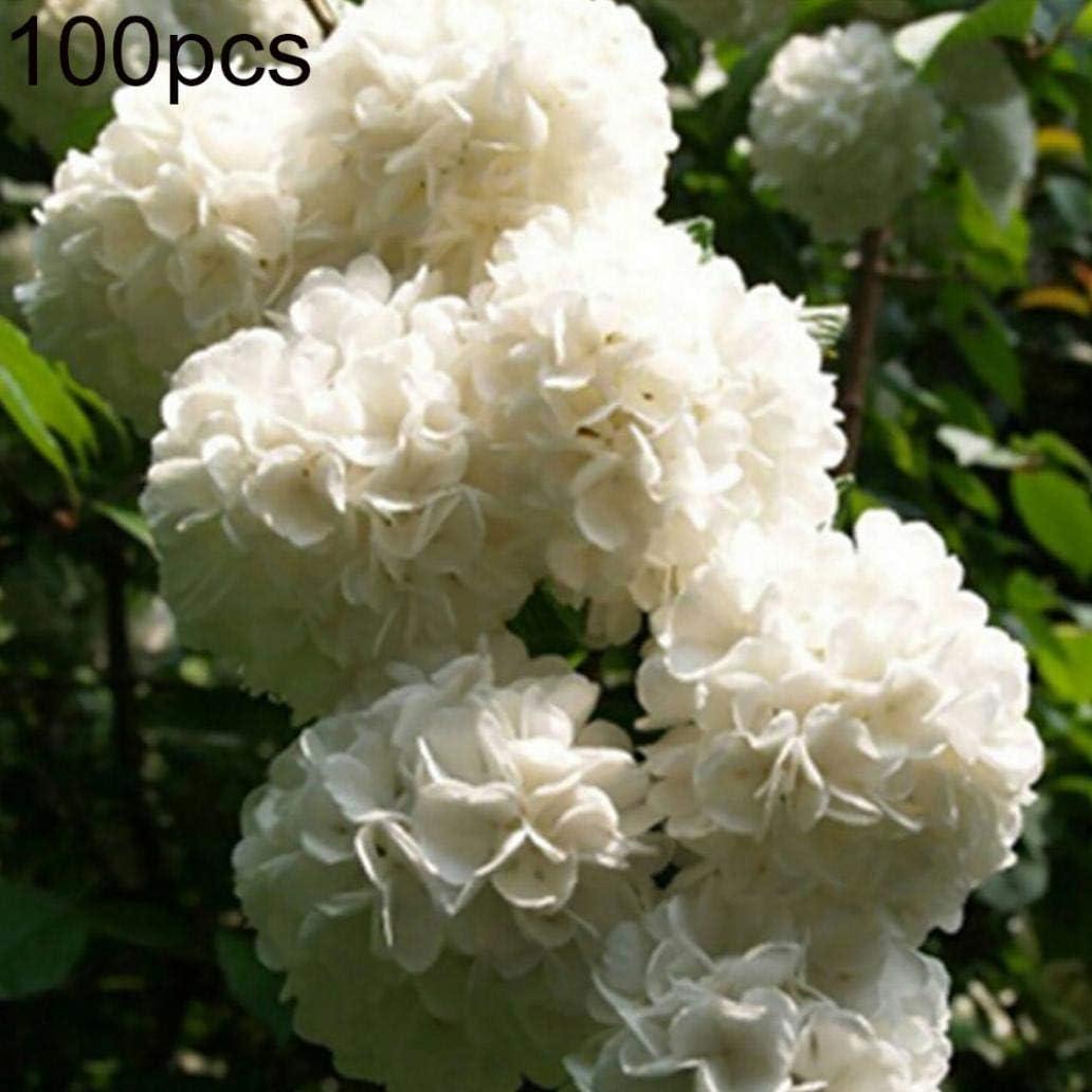 Uticon Las Semillas 100pcs La Flor Del Geranio Pelargonium Jard¨ªN Balc¨®N Bonsai Planta De Tiesto Decoraci¨®N - Semillas Blancas Geranio