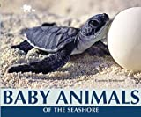 Baby Animals of the Seashore, Carmen Bredeson, 0766035654