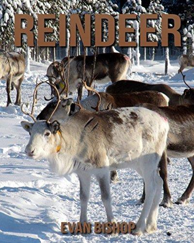 Reindeer: Children Pictures Book & Fun Facts About Reindeer