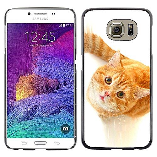 STPlus Gato en una caja Animal Carcasa Funda Rigida Para Samsung Galaxy S6 #28