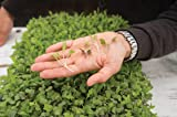 Microgreens Seeds Kit - 100% Non GMO