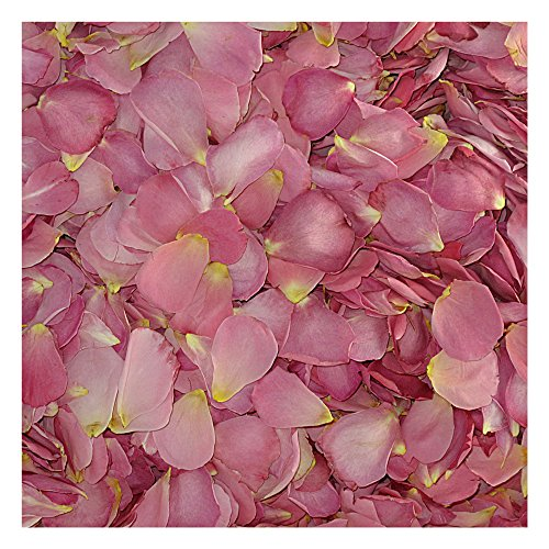 Sexy Rexy Freeze Dried Medium Pink Rose Petals Wedding Petals from Flyboy Naturals 240 cups by Flyboy Naturals
