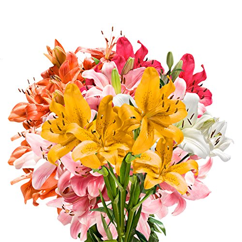 GlobalRose 28 Blooms of Assorted Color Asiatic Lilies - Fresh Flowers for Delivery by GlobalRose