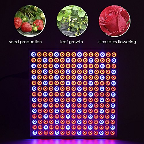 Top 10 Best Red and Blue LED Lights for Plant Growing Reviews 2019-2020 cover image