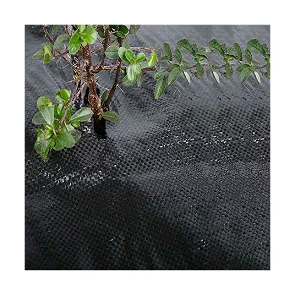 Piantagione di piante per il controllo delle erbacce - Barriera erbaccia per copertura suolo - Ecologica per il… 4 spesavip