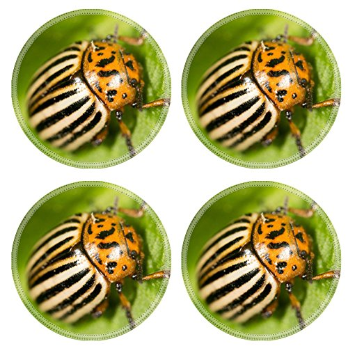 luxlady-natural-rubber-round-coasters-image-id-39777597-colorado-potato-beetle-on-a-green-leaf
