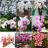 ZHUOTOP Hot 20Pc Mix Color Phalaenopsis Flower Seeds Bonsai Plant Butterfly Orchid Seeds